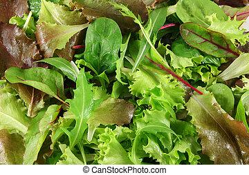 Fresh mixed lettuces, top view - Mixed lettuces closeup
