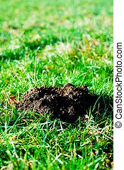 Fresh molehill on a green meadow garden