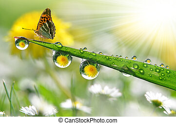 dew and butterfly - fresh morning dew and butterfly