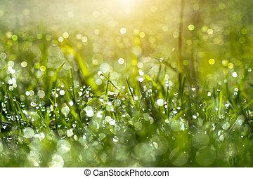 Fresh morning dew on spring grass, natural green light...