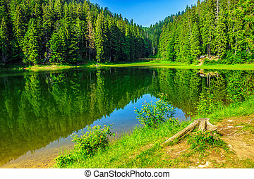 fresh morning near forest lake - landscape by the lake in...
