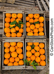 Fresh Moroccan oranges in wooden box