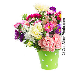 fresh multicolored aster flowers in green pot close up isolated on white background