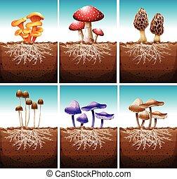 Fresh mushrooms growing in the ground