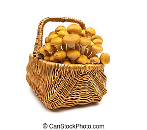 fresh mushrooms in a wicker basket isolated on white background