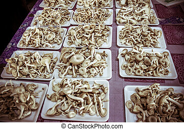 fresh mushrooms   in the market Thailand