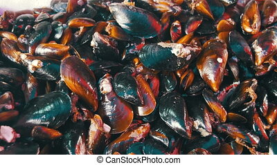 Fresh Mussels on the Counter of the Fish Store. Seafood...