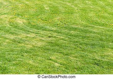 Fresh natural lawn grass