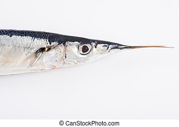 Fresh needlefish for a healthy diet