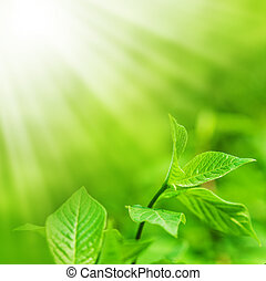 fresh new green leaves and copy spase - Defocus view for ...