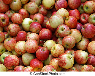 Fresh New Zealand Apples ready for sale