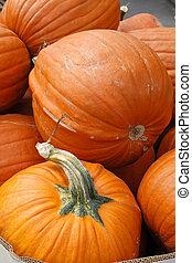 several large fresh bright orange okanagan valley pumpkins.