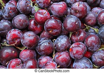 several fresh okanagan deep purple fresh succulant plums.