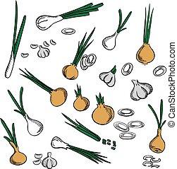 Fresh onion, leek and garlic vegetables