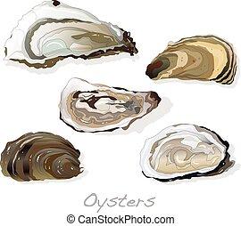 Fresh opened oyster on white
