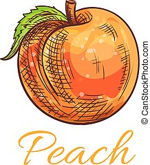 Fresh orange peach fruit sketch for food design