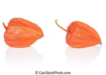 Fresh orange physalis isolated on white
