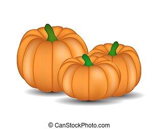 Fresh Orange Pumpkin Isolated on White Background Vector Illustr