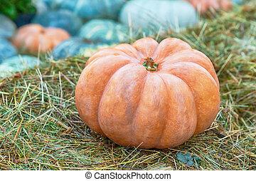 fresh orange pumpkin stands on a brown dry hay of autumn crop