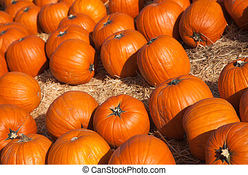 Fresh Orange Pumpkins and Hay in a Rustic Outdoor Fall Setting
