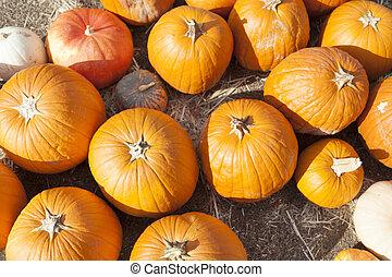 Fresh Orange Pumpkins and Hay in Rustic Fall Setting