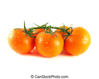 Fresh orange tomatoes on branch (water drops). Isolated on white background.