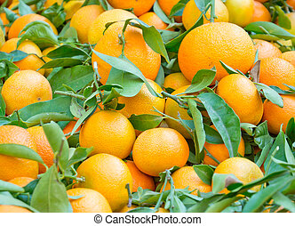 Fresh oranges with leaves