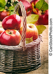 Fresh organic apples