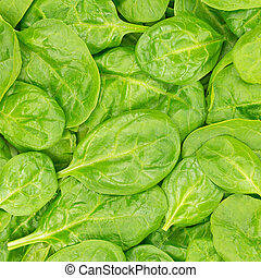 Fresh Organic Baby Spinach background or texture. Raw food.