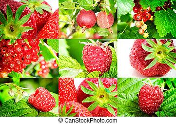 Fresh organic berries