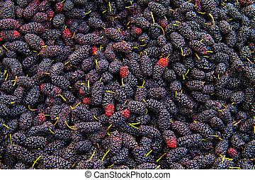 Fresh Organic Black Mulberry - Heap Of Fresh Ripe Black...