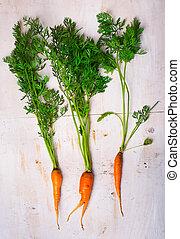 fresh, organic carrot