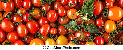 Fresh organic cherry tomatoes as background, closeup. Red tomatoes background. Long wide banner flat lay, top view. Organic vegetable production. Vegetables harvest