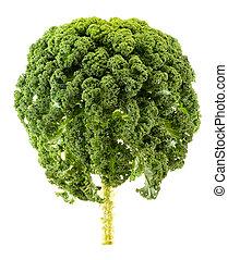 Fresh organic kale isolated on white