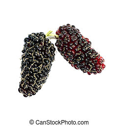 fresh organic mulberry