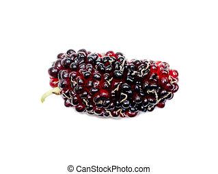 fresh organic mulberry