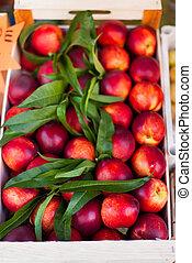 Fresh organic Nektarine fruits. Frame composition of fruits...