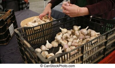 Close up footage of a market trader preparing for business, placing fresh garlic bulbs in a wooden display pale from trays at ecological farming fair