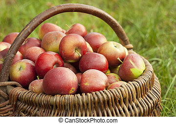 red apple in a basket