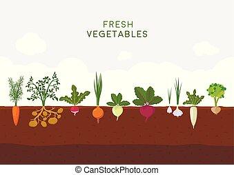 Fresh organic vegetable garden on blue sky background....