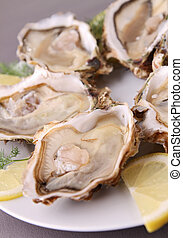 oyster - fresh oyster