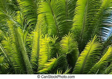 fresh palm leaves against blue sky