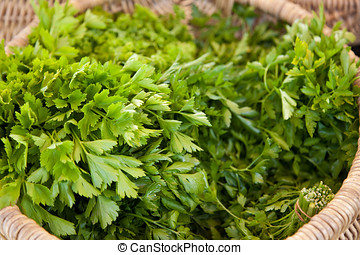 Fresh parsley - Bunches of fresh parsley in a basket at the...
