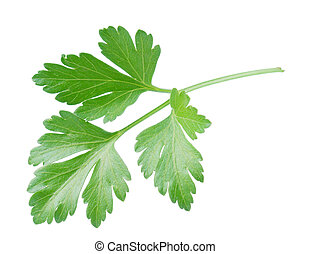 Fresh parsley - Fresh green leaves of parsley on white...