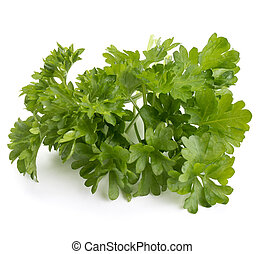fresh parsley herb leaves isolated on white background...