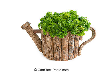 fresh parsley in wooden pot on white background