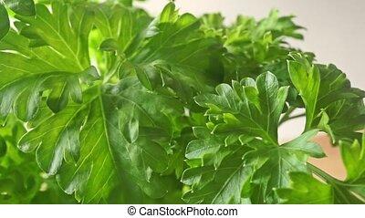 Fresh parsley macro dolly video clip