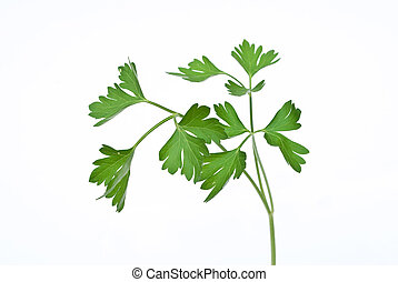 Fresh parsley on white