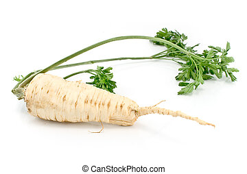 Fresh parsley with root and leaf