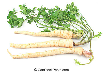 Fresh parsley with root and leaf on white